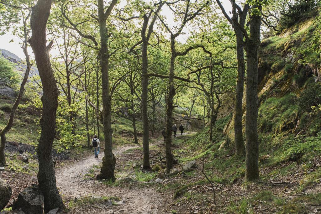 Foråret er på vej til Bornholm. Her ser man stenhuggerstien, hvor blomster og træer så småt springer ud.