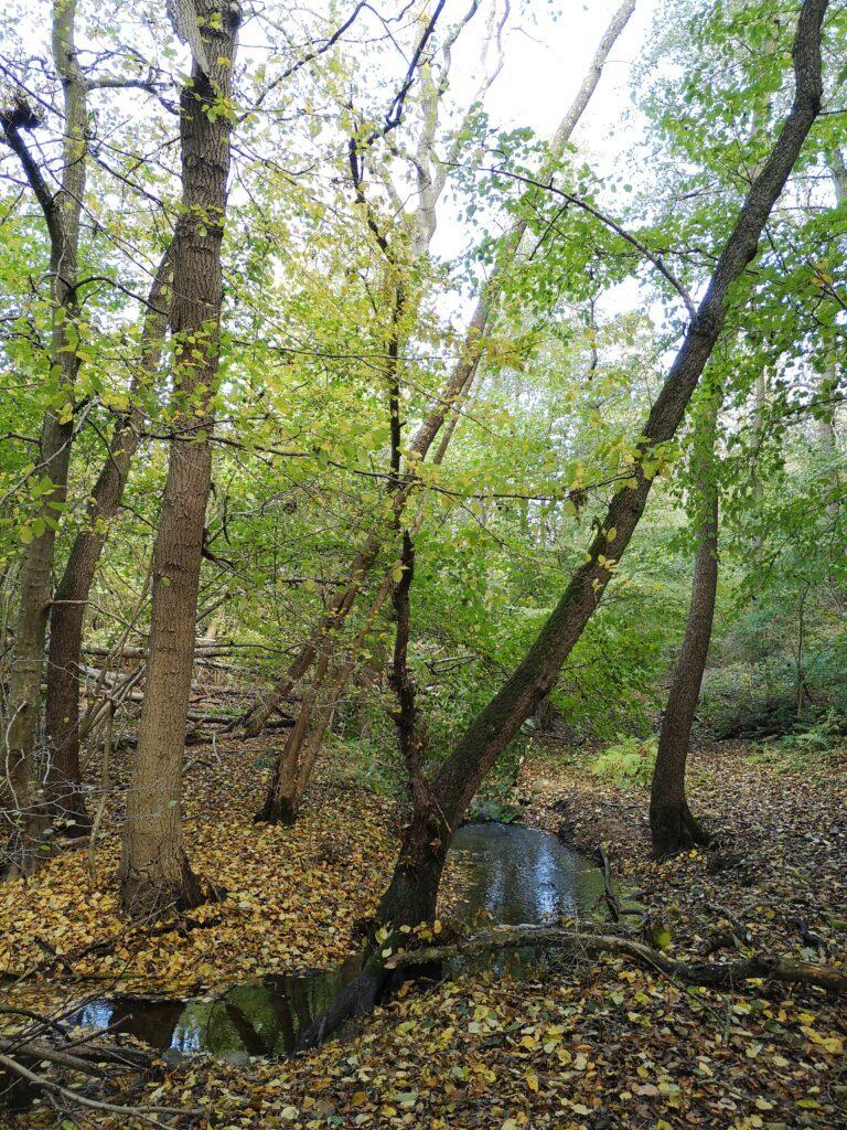 Med faldne blade som fylder det meste af dalen har efteråret for alvor meldt sin ankomst