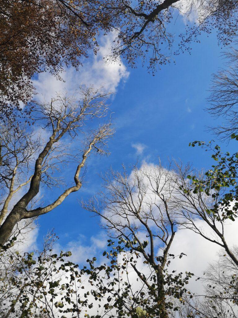 Blå himmel på en efterårs vandretur