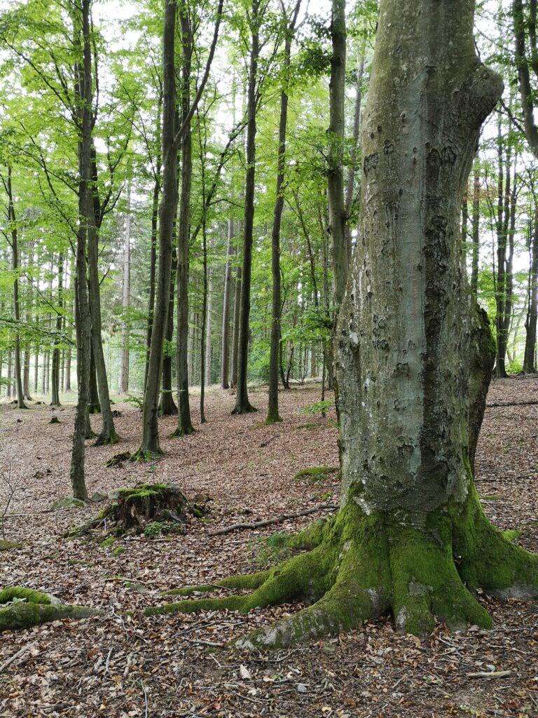 Paradisbakkerne er et stort natur- og skovområde